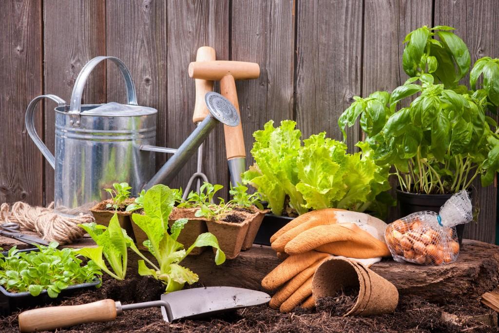 jardineria, herramientas, jardín