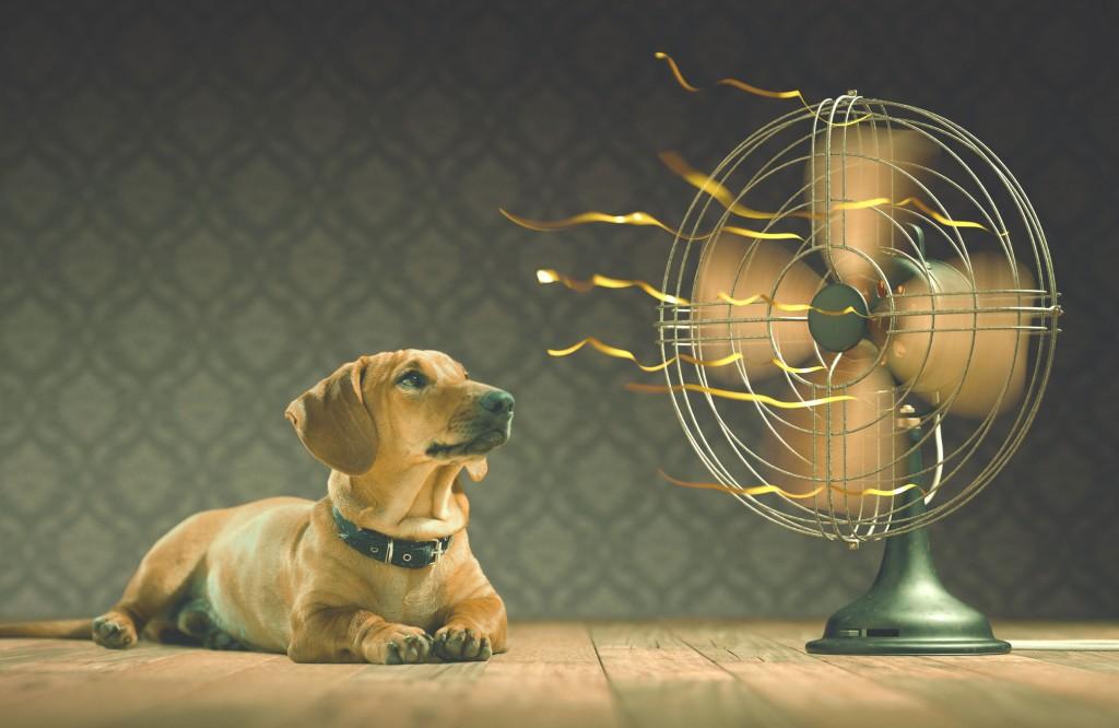 alquiler de ventilador